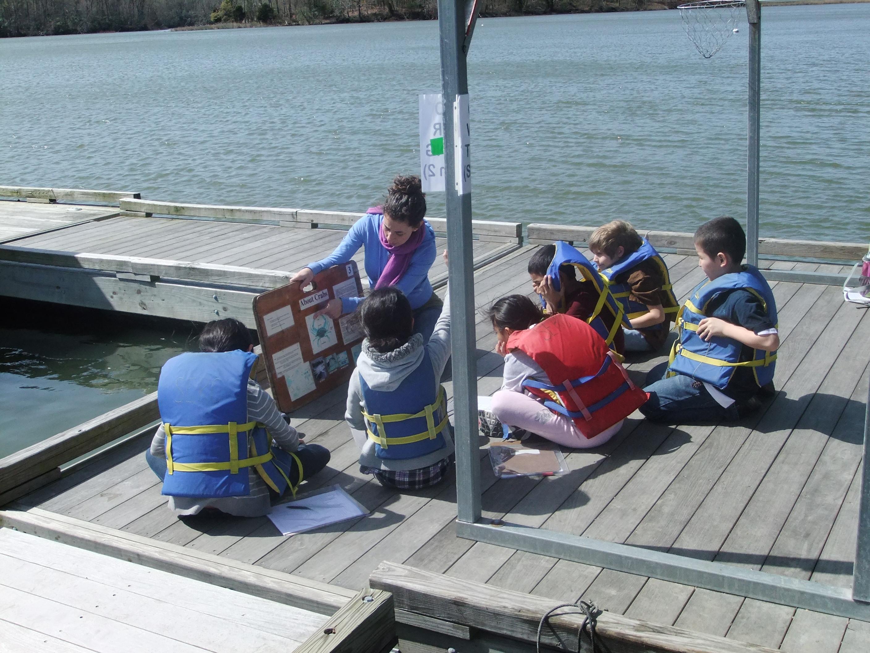 Explaining Blue Crab Anatomy Estuary Chesapeake