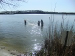 Students go out into the shallow waters of the seining beach to catch fish using a seine net.